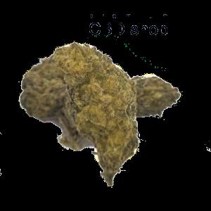 Bay Area gold CBD Bud Blüte