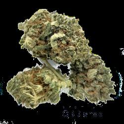 CBD Blüten |Buds