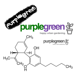 purplegreen Set premium CBD shop Linz Wien online bestellen