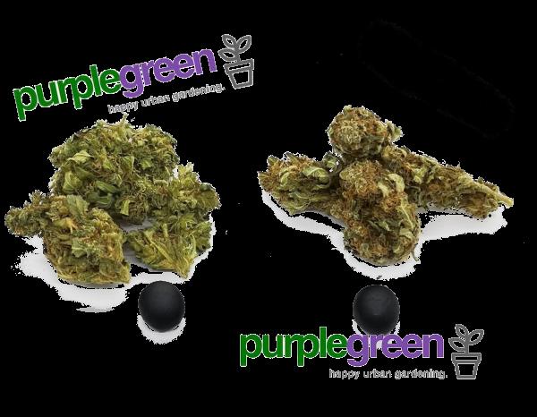 Das purple green Set für Liebhaber der guten Ware!