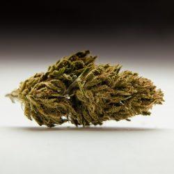 CBD Aromablüten